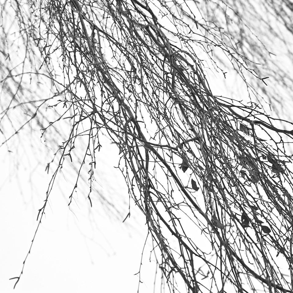 "Marko Toomasti fotonäitus ""Betula"""